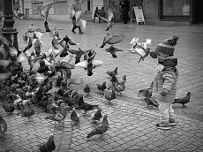 Mmj is chasing birds at the town square, Zielona Gora.