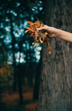 autumnal-hues
